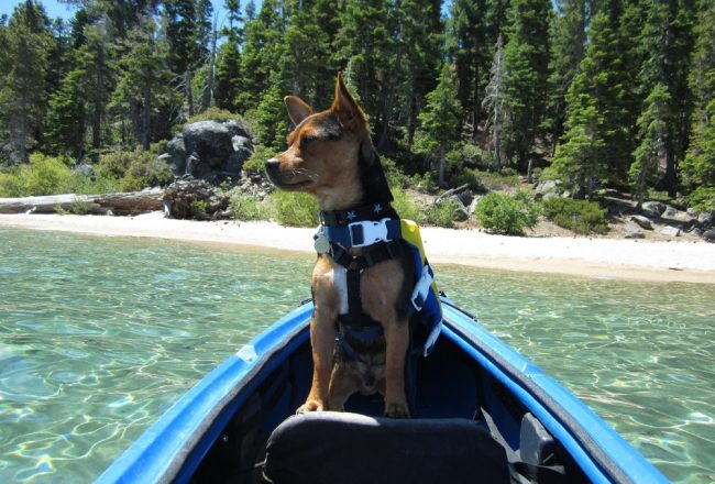 dog friendly places in lake tahoe 2dog friendly places in lake tahoe 2