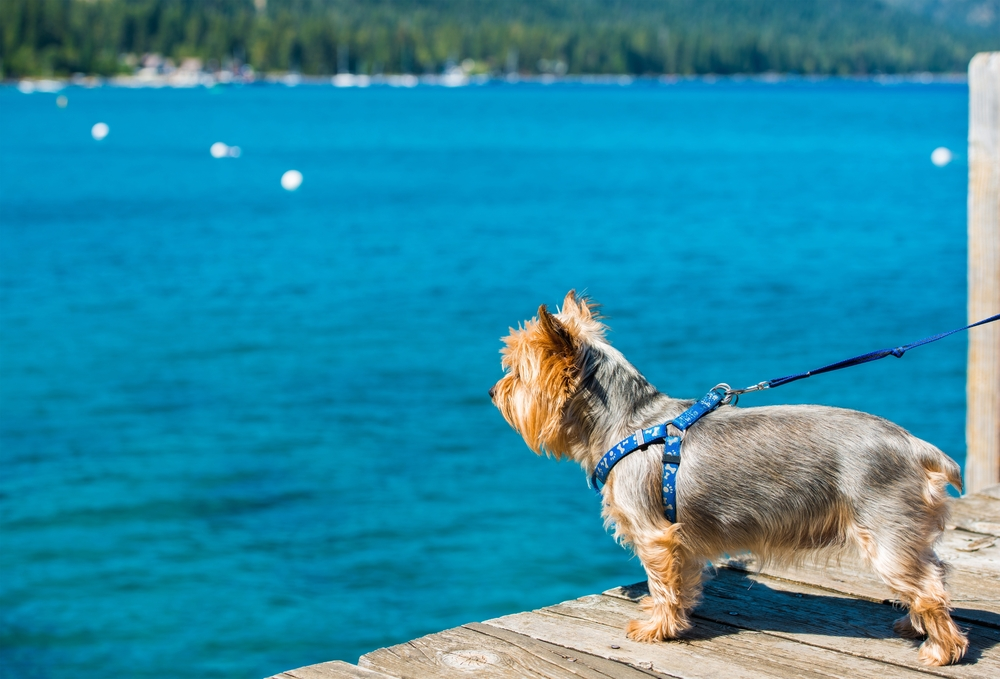 the best dog friendly beaches in lake tahoe