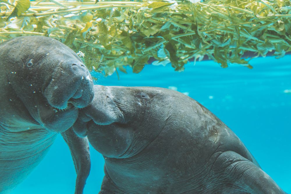 the Best Places to See Manatees in Florida